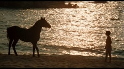 Revisit: The Black Stallion