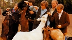 Ranking Pet Sounds