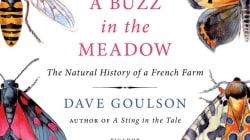 A Buzz in the Meadow: by Dave Goulson