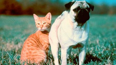Childhood Revisited: The Adventures of Milo & Otis