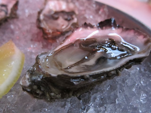 EAT-oysters
