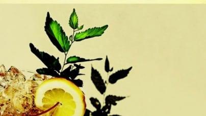 White Denim: Corsicana Lemonade