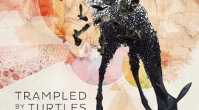 Trampled by Turtles: Wild Animals