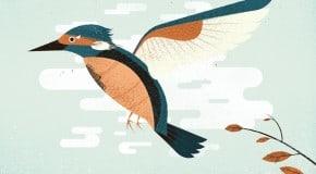 Prawn: Kingfisher