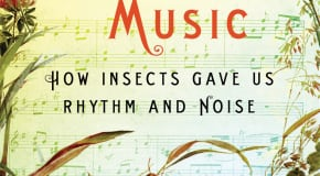 Bug Music: by David Rothenberg