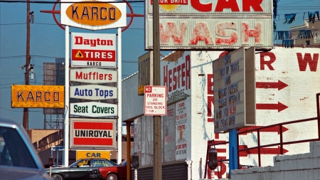 The Democratic Forest: by William Eggleston