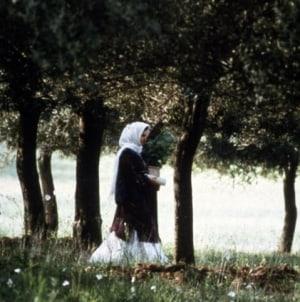 Oeuvre: Kiarostami: Through the Olive Trees