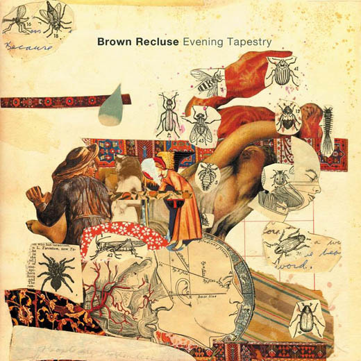 Brown Recluse: Evening Tapestry