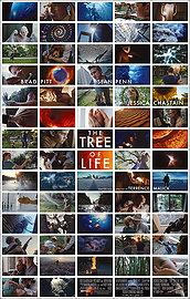 6890-treeoflife.jpg
