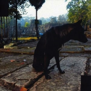 BLACKTRUFFLE011
