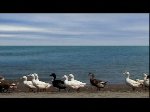 Oeuvre: Kiarostami: Five