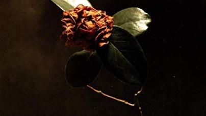 St. Paul and the Broken Bones: Young Sick Camellia
