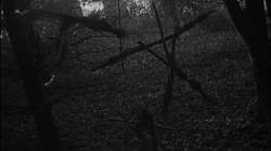 Holy Hell! The Blair Witch Project Turns 20