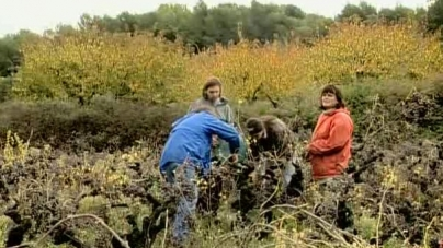 Oeuvre: Varda: The Gleaners and I: Two Years Later