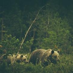 Warmth: Wildlife Addendum